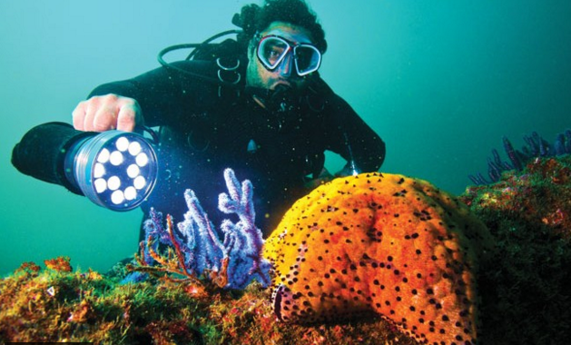Starfish UAE