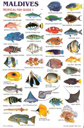 MaldivesFishChart2