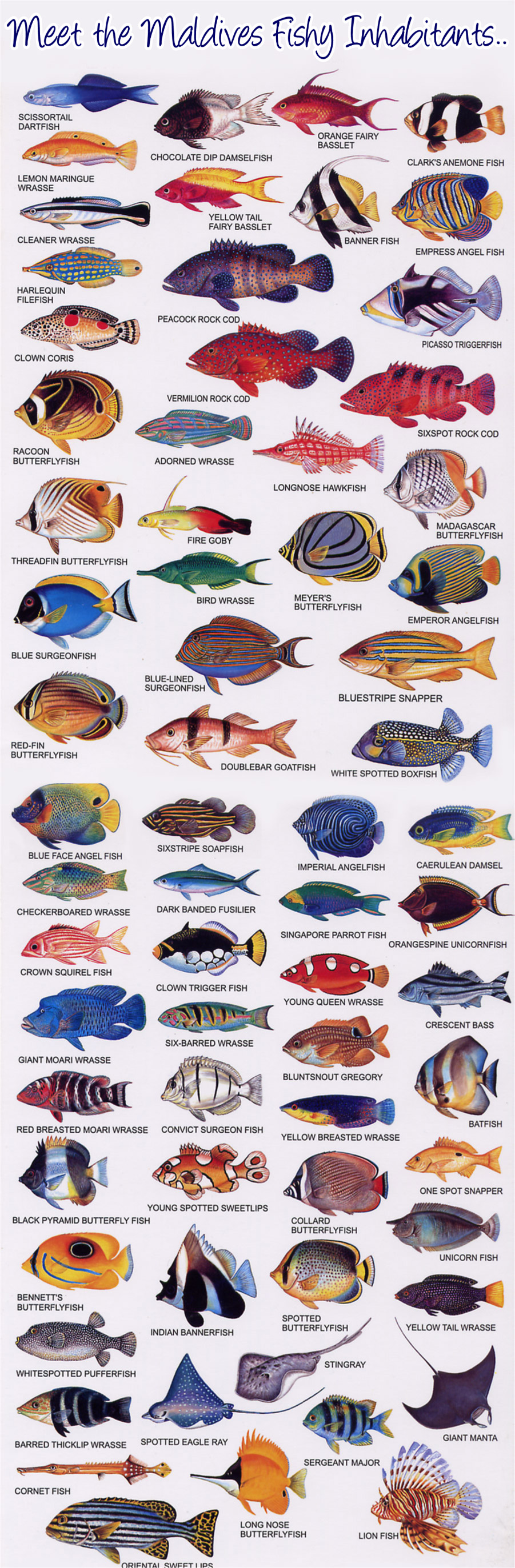 Fish of the Maldives